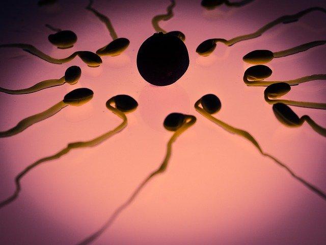 sperme peut devenir transparent